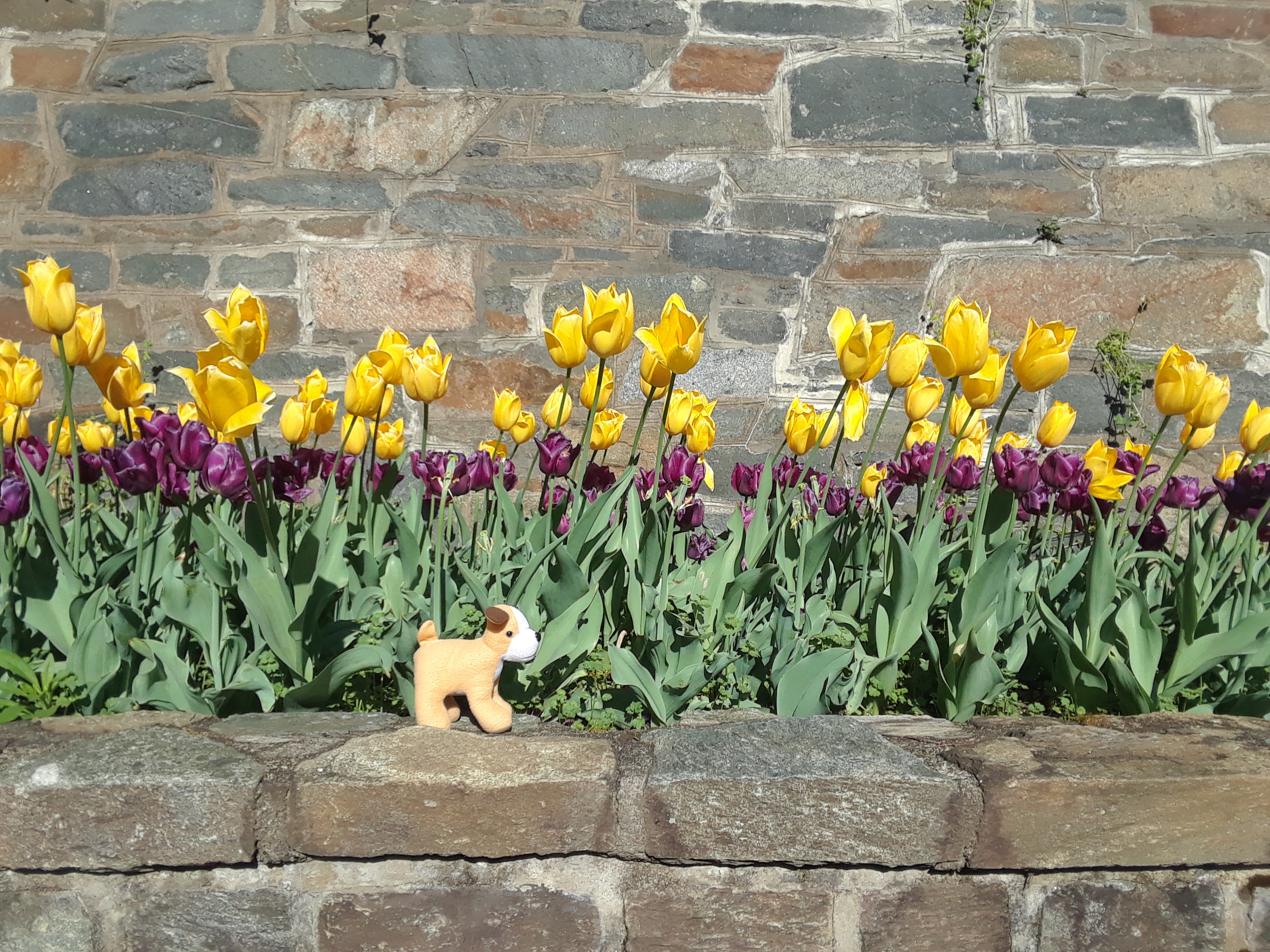 Tulips and Toddler Toys, Apr 2019